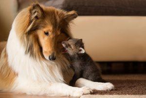 IMPRESIONANT! Cum a fost posibilă PRIETENIA dintr-un ANIMAL SĂLBATIC și unul DOMESTIC