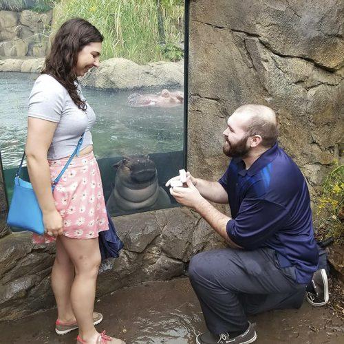 Puiul de hipopotam CURIOS care a eclipsat un cuplu. Cerere în CĂSĂTORIE INEDITĂ