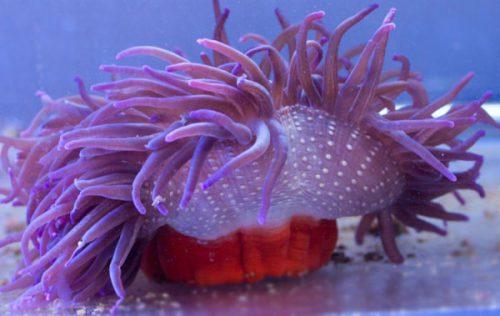 Ce VIEȚUITOARE MARINE putem avem într-un acvariu și cat COSTĂ?