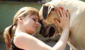 Sunt ADORABILI! Nu-i mai ANTRENAȚI PENTRU LUPTĂ! Câinii Boerboel îşi iubesc enorm STĂPÂNII