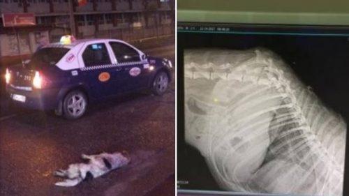 """Taximetristul """"UCIGAȘ"""" de animale! Încă un caz de CRUZIME ce îngrozește opinia publică din România"""