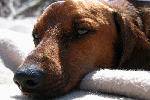 Recompensă pe capul celor care OTRĂVESC câinii unui oraș din România