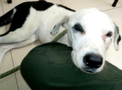 O nouă poveste cutremurătoare din lumea animalelor! Ce s-a întâmplat cu un câine, după ce a fost părăsit de stăpân!