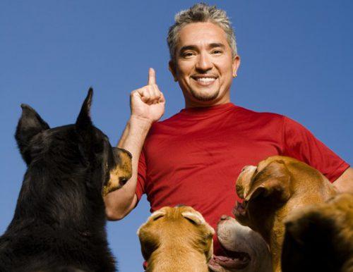 SECRETELE celui mai celebru dresor din lume. Dezvăluirile lui CESAR MILLAN despre mărirea duratei de VIAȚĂ a câinelui tău