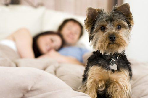 De ce trebuie să lași câinele să DOARMĂ cu tine în pat? 7 SUPER MOTIVE