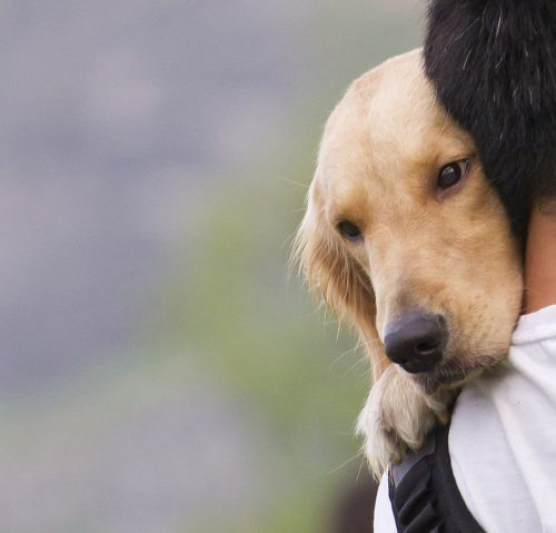 Dog on a man shoulder