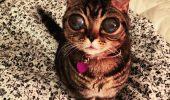 """ACUZAȚII FĂRĂ PRECEDENT! O felină, """"SUSPECTĂ"""" de tentativă de omor!"""