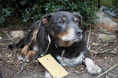 Povestea câinelui Louie, care a străbătut tot PĂMÎNTUL, iar acum a ajuns și la noi