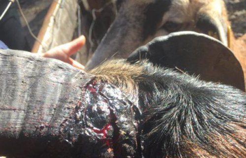 Ceva e putret la Zoo Timișoara – Animalele sunt bolnave și trăiesc în mizerie I FOTO – VIDEO