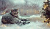 Previziunile unei FELINE profet: Pisica anunță o iarnă…