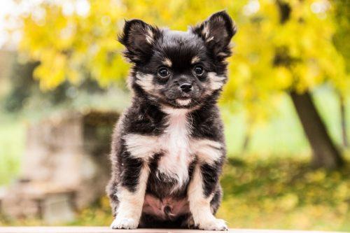 Cum trebuie îngrijit câinele în SEZONUL RECE. Tot ce trebuie să știi despre adăpost și alimentație