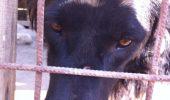 Povestea reală a lui Negruțu-albuțu a impresionant toată România. Iubitorii de animale sunt uimiți