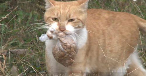 O pisică a refuzat să mai mănânce, dar primea în schimb hrană la pachet. Motivul este incredibil / VIDEO