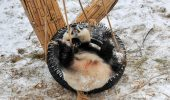 Cum reacționează doi Panda gigant când văd zăpadă | Foto amuzant