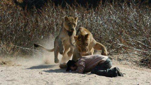 """ȘOCANT! VÂNĂTORUL a devenit VÂNAT. Un braconier a fost mâncat de lei: """"I-au mâncat corpul și au lăsat capul"""""""