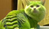 Această felină sigur NU a vrut să fie transformată într-un dragon, dar stăpânii au făcut-o oricum / VIDEO