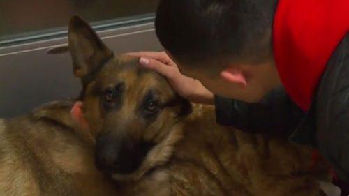 POVESTE CUTREMURĂTOARE! Uite ce s-a întâmplat cu un câine ciobănesc după ce a SALVAT  VIAȚA STĂPÂNULUI său