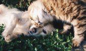 UIMITOR! Câți bani a strâns un medic veterinar pentru ANIMALELE FĂRĂ STĂPÂN din România la maratonul din Londra