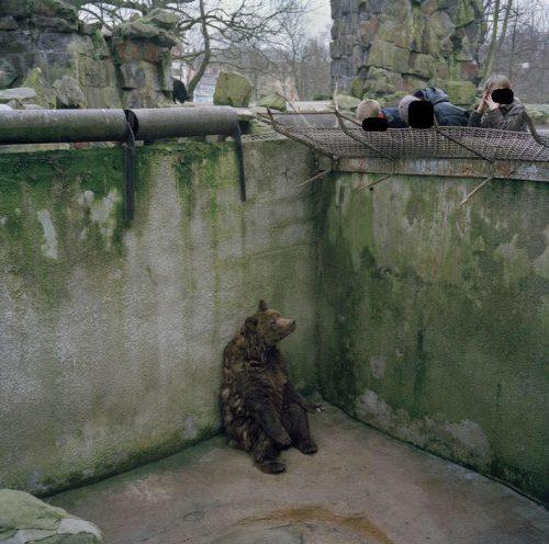 Grădina zoologică din Piatra Neamț, LAGĂR de EXTERMINARE pentru animalele captive