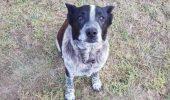 Este un câine SURD ȘI ORB, însă nimeni NU l-a OPRIT din drumul lui. Uite ce a făcut. NIMENI nu s-a așteptat la asta
