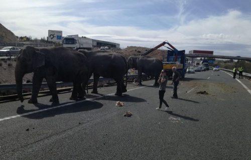 ȘOCANT! Uite ce s-a întâmplat cu un camion care transporta elefanți / FOTO