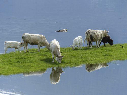 Uite ce s-a întâmplat cu ANIMALE ABANDONATE de propritari în urma unor inundații / IMAGINI ȘOCANTE