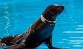 SURPRIZĂ DE PROPORȚII! Uite care sunt noile VEDETE ale Delfinarului de pe litoral