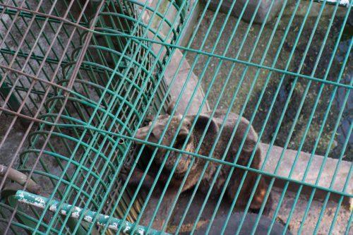 Impresionant! A scăpat de gratii după 20 de ani de captivitate. Imagini emoționante