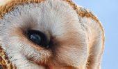 Cele mai IUBITE specii de păsări din lume, AMENINȚATE CU DISPARIȚIA. Uite despre ce este vorba / FOTO