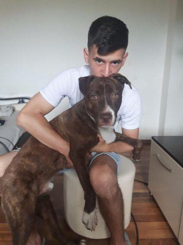 LUPTĂ să-şi păstreze câinele şi plătește amendă după amendă. Aflați poveste celui mai trist iubitor de animale