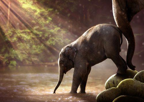 """SUPER AMUZANT! Ce s-a întâmplat cu un elefant PLIMBĂREȚ care a trecut """"CLANDESTIN"""" graniţa din China în Laos / VIDEO"""