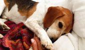 Povestea REALĂ a lui  Guy, câinele ADOPTAT de ducesa Meghan