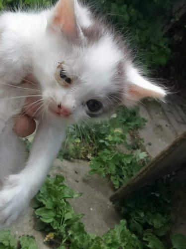 AVENTURA unui pui de pisică a devenit subiect de discuție în Sibiu. Uite cum s-a terminat TOTUL