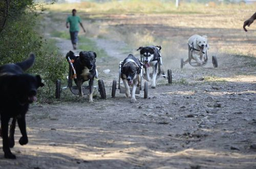 Vedetele autohtone vor strânge hrană pentru ANIMALELE FĂRĂ ADĂPOST la PetExpo