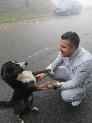 O nouă AVENTURĂ pentru Max, câinele maidanez care a SALVAT VIAȚA unui biciclist în Munții Semenic
