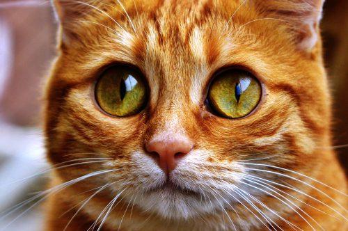 """A suferit o traumă? Uite de ce o pisică atacă doar bărbați și câini pe stradă. """"Poate că cineva a rănit-o"""""""