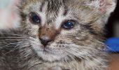 Pneumonia la pisici, o boală FOARTE GRAVĂ. Iubitorii de feline trebuie să știe ce poate provoca această condiție și cum să tratează
