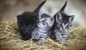 HALUCINANT! Uite ce se ÎNTÂMPLĂ atunci când nu-ți sterilizezi pisica. ABANDONEZI puii fără să te gândești că pot murii în câteva ore / FOTO în articol