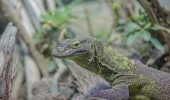 UIMITOR! Reptilele, AMENINȚATE cu dispariția. Uite cine sunt DEVORATORII
