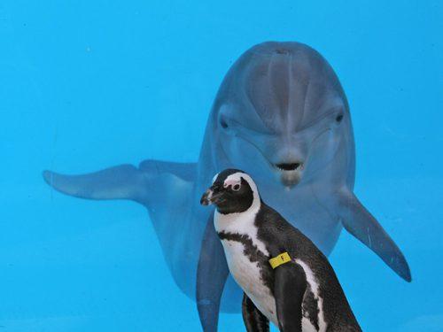 Este înfiorător! Un DELFIN şi mai mulţi PINGUINI au ieșit din SCENĂ în cel mai JALNIC mod. Autoritățile sunt în alertă. Starea lor este CRITICĂ