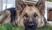 Randi a copilărit alături de câini. Uite ce spune despre CEL MAI BUN PRIETEN al său