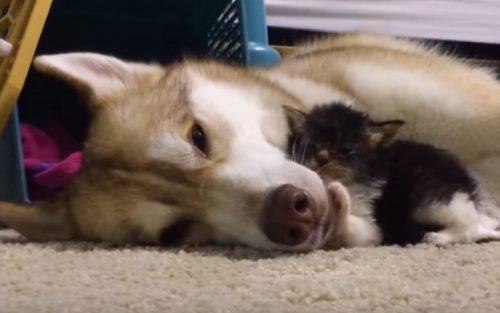 """Cercetătorii au făcut un anunț IMPORTANT: """"Orice stăpân de câine sau pisică…"""""""