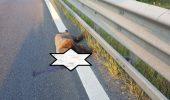 ȘOCANT! Un urs a fost LOVIT MORTAL de o mașină pe Autostrada 1 / FOTO în articol