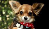 POVESTE DUREROASĂ! Un iubitor de animale a încercat orice pentru a-și RECUPERA CÂINELE PIERDUT, dar a fost în zadar!