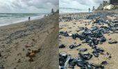 Motivul INCREDIBIL pentru care malul Mării Negre este invadată de MEDUZE EȘUATE