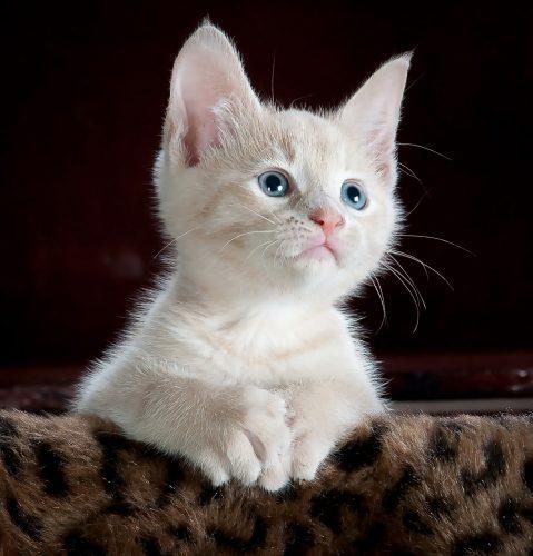 Iubitorii de FELINE sunt ȘOCAȚI. NU mai au voie să țină pisici ca animale de companie! Motivul din spatele acestei DECIZII este CRUCIAL