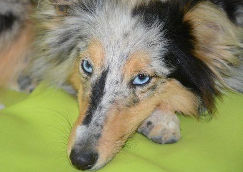 Ai un câine MOFTUROS LA MĂNCARE? Iată 9 ponturi de a va dezobișnui patrupedul să mai fie pretențios