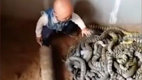 ȘOCANT! Un copil s-a apropiat EXTREM DE MULT de mai mulți șerpi PERICULOȘI, iar tatăl filma. Ce a urmat i-a lăsat pe toți fără cuvinte