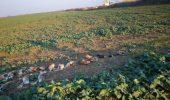 Șocant! Zeci de animale, găsite fără suflare pe câmp