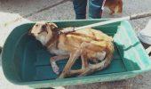 Imaginile GROAZEI care îi îngrozesc pe iubitorii de animale. Vezi în ce condiții TRĂIESC animale din ADĂPOSTUL de STAT de la Onești /  FOTO